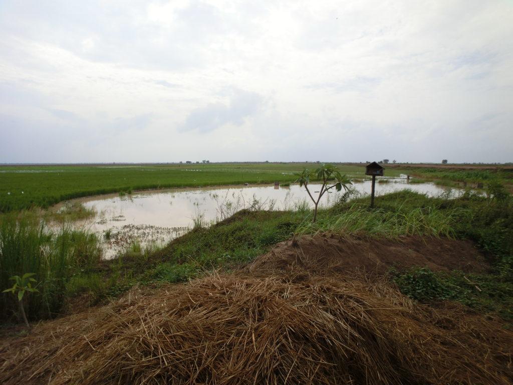 水たまり農地